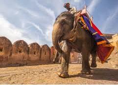 吴哥窟明年起禁骑大象