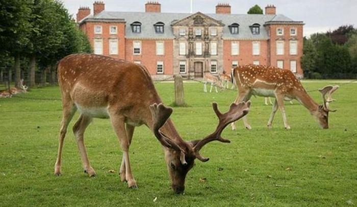 英国掀解封出游热!National Trust花园下周重开已订满,哪里好玩又安全?