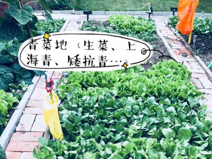 """英华人掀种菜热!全球粮食危机、二次疫情和""""脱欧""""当前,未雨绸缪?"""